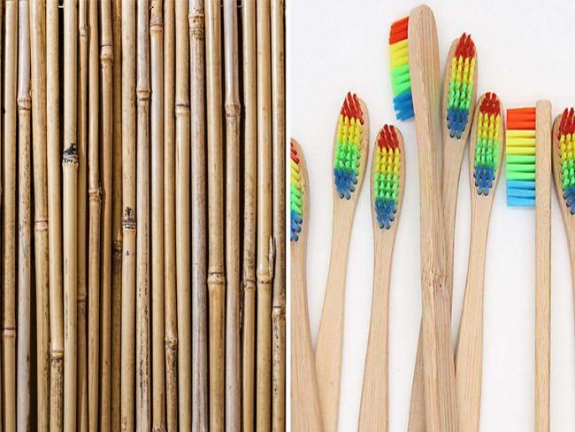 Empresa americana produz e doa escovas de dentes feitas de bambu