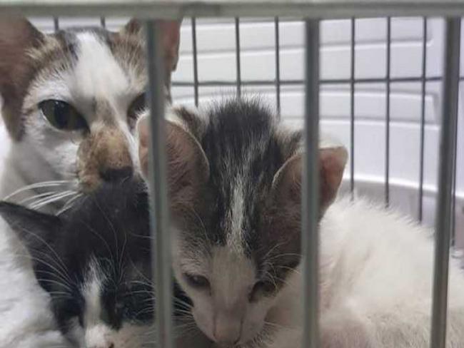 Casal salva 4 gatos em incêndio do Museu Nacional
